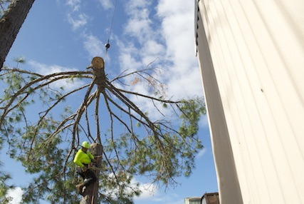 Tree removal equipment used by us in Orlando