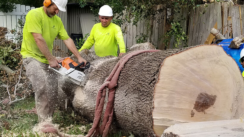 tree surgeon, large tree removal, tree cutting, tree companies, tree service cost, tree work now, fallen tree removal, dead tree removal, brush removal, tree debris removal, pine tree removal, oak tree removal, oak tree trimming, tree care professionals, tree branch removal,