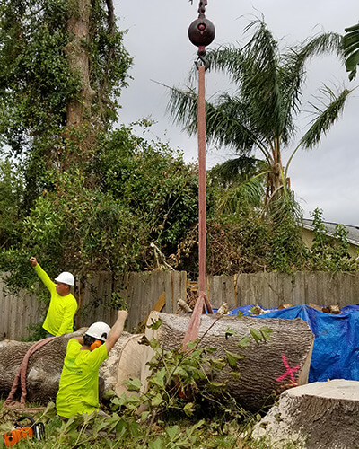 tree cutting, tree companies, tree service cost, tree work now, fallen tree removal, dead tree removal, brush removal, tree debris removal, pine tree removal, oak tree removal, oak tree trimming, tree care professionals, tree branch removal, tree experts