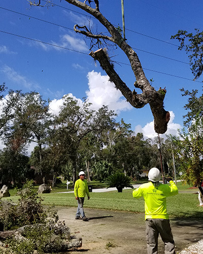 tree service cost, tree work now, fallen tree removal, dead tree removal, brush removal, tree debris removal, pine tree removal, oak tree removal, oak tree trimming, tree care professionals, tree branch removal