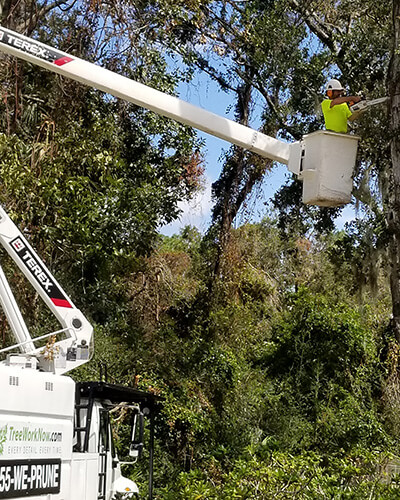 dead tree removal, brush removal, tree debris removal, pine tree removal, oak tree removal, oak tree trimming, tree care professionals