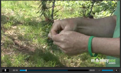 Determining whether your tree has a problem Video