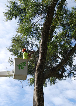 Does the tree service you are hiring have insurance? We do.