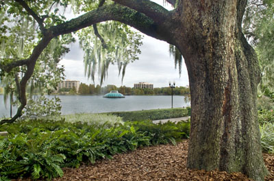 Our tree trimming company's green practices maintain the beauty of live oaks in such settings as Lake Eola