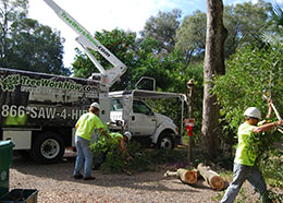 Crew completing tree service in Orlando