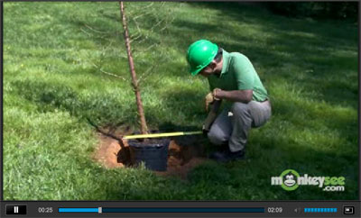 Planting Care for Trees Video
