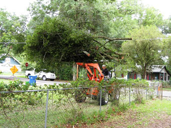 Tree service in Orlando removing brush with tractor