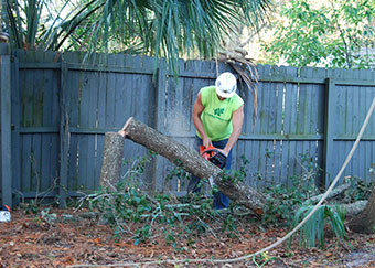 Tree removal in Orlando