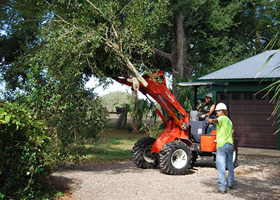small tractor lifting tree limbs while performing tree service in Orlando