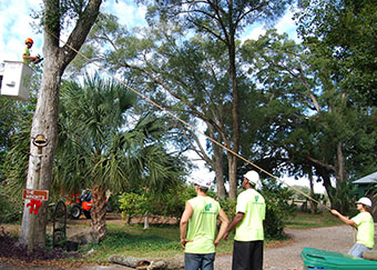 Ensuring the safety of a tree trimming crew member in Orlando