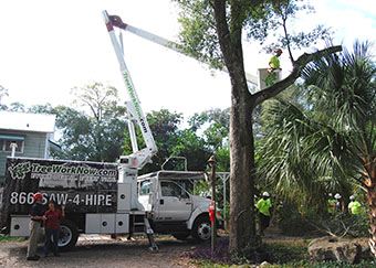 Large bucket truck assists crew trimming trees in Orlando